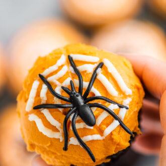 A hand holding a Halloween spider cupcake.