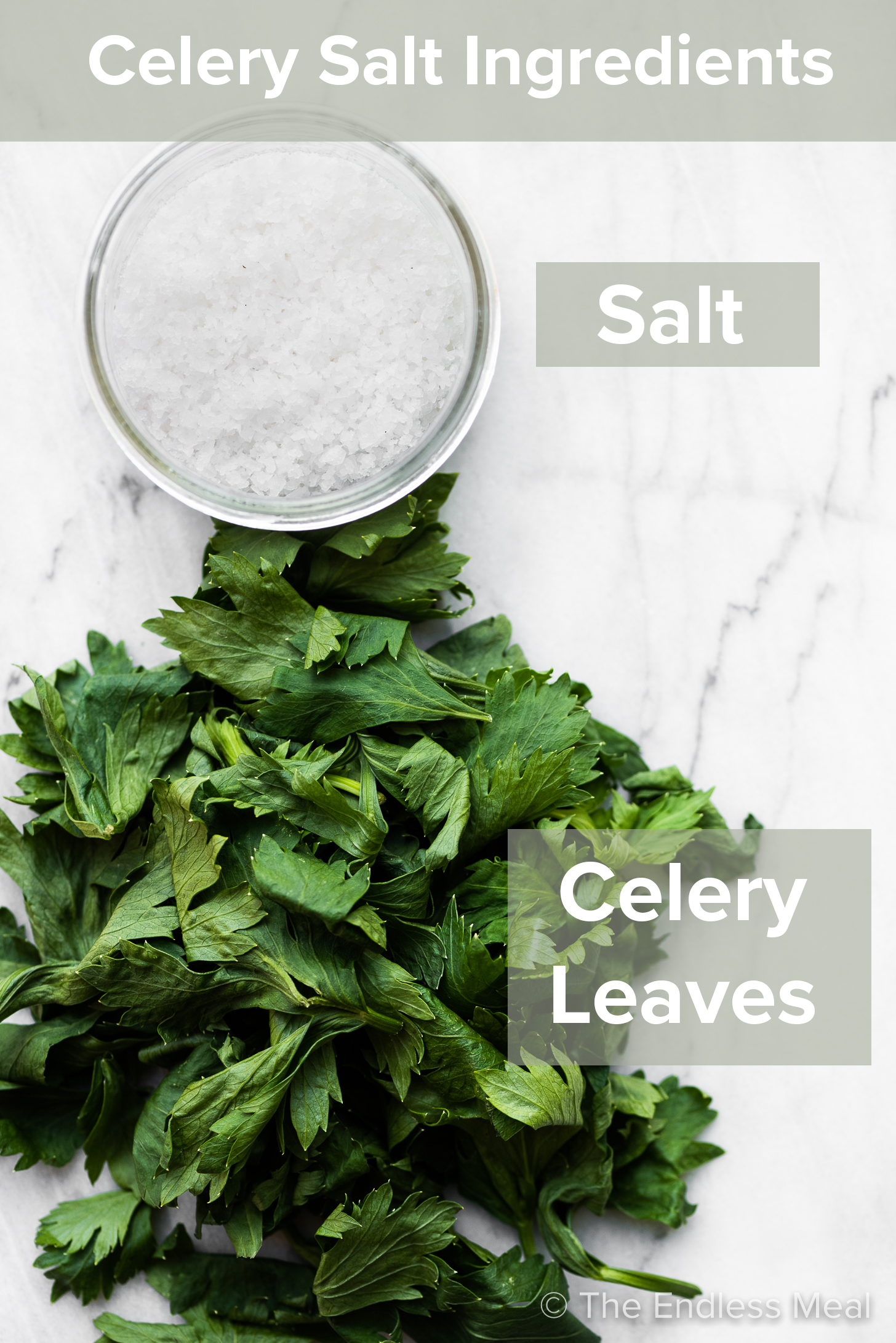 The ingredients to make this celery salt recipe with ingredient titles.